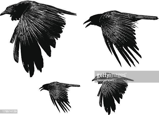 ravens - crow bird stock illustrations