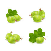 Realistic Detailed 3d Gooseberries with Green Leaves Icons. Vector