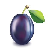Realistic Detailed Fruit Plum. Vector