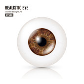 Realistic Detailed Human Eyeball. Vector Illustration