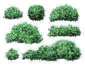 Realistic garden shrub. Nature green seasonal bush, boxwood, floral branches and leaves, tree crown bush foliage. Garden green fence vector illustration set