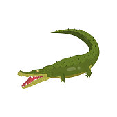 Realistic gavial crocodile isolated on white background