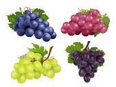 Realistic grapes. Vector set of various grape variety