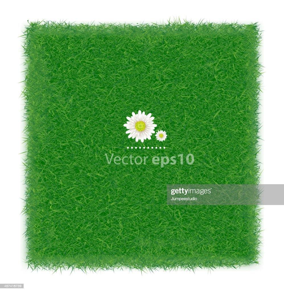 Realistic green grass field background, Vector illustration