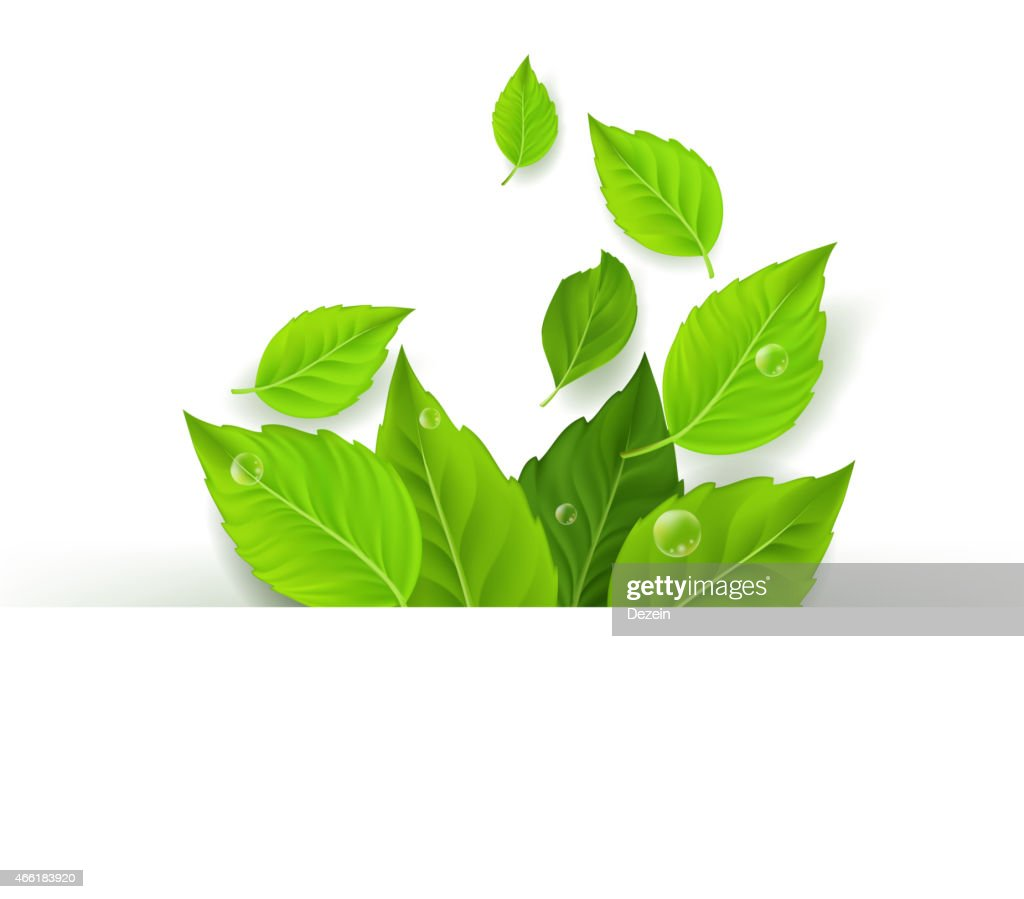 Realistic Leaves Background with White Space