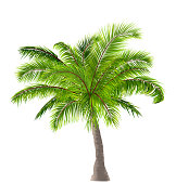 Realistic Palm Tree Isolated on White Background