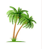 Realistic palm tree with coconuts Vector 3d exotic