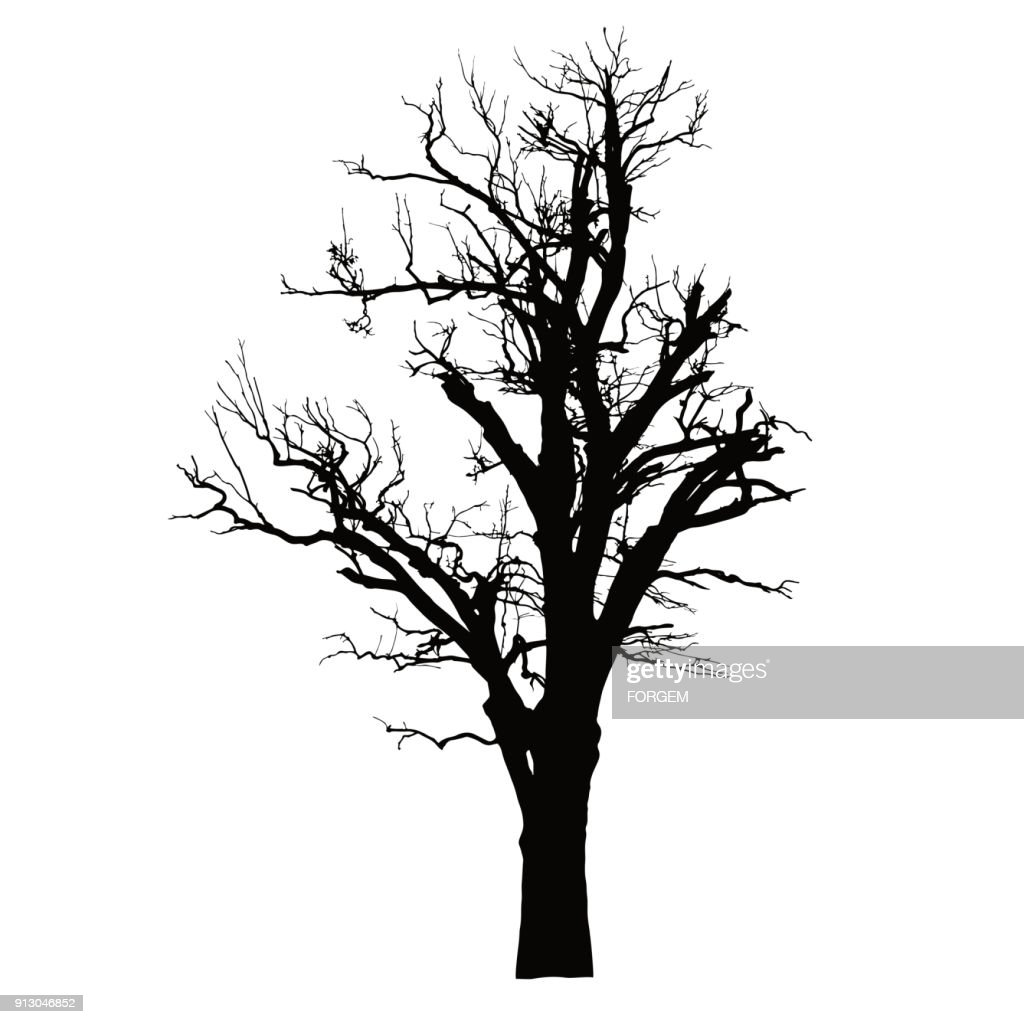 Realistic silhouette of a dead tree with dry branches - isolated vector on a white background