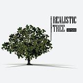realistic tree - vector illustration