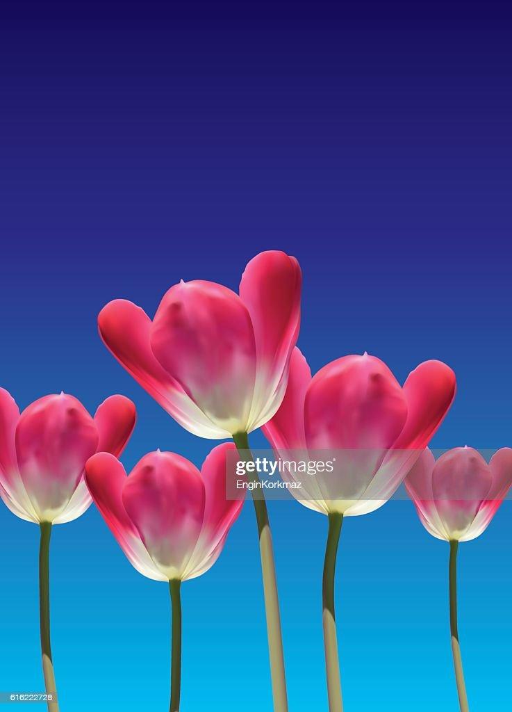 Realistic vector 3D tulips : Vektorgrafik