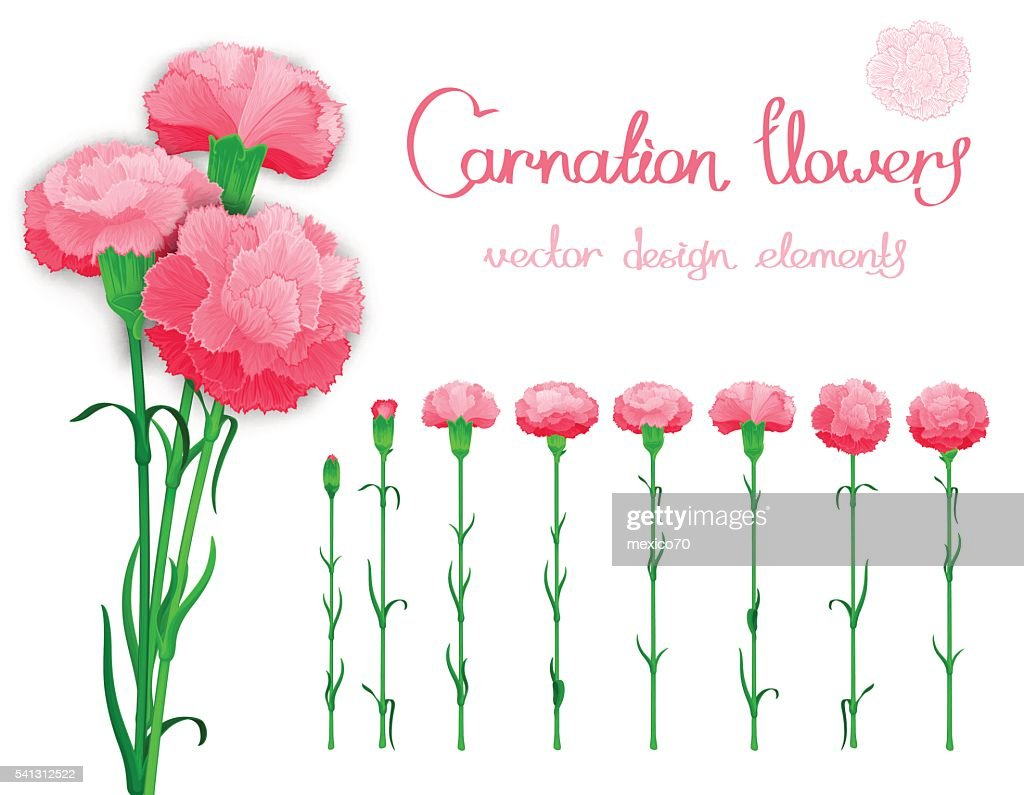 Realistic vector flowers set