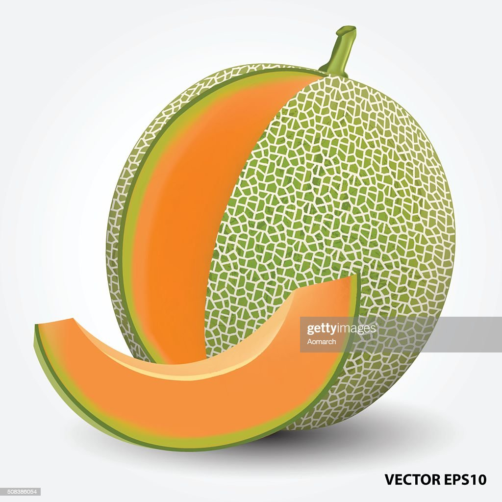 Realistic vector illustration of a melon or cantaloupe melon.