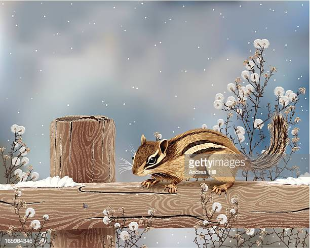 realistic vector illustration of chipmunk in winter with copy space. - chipmunk stock illustrations