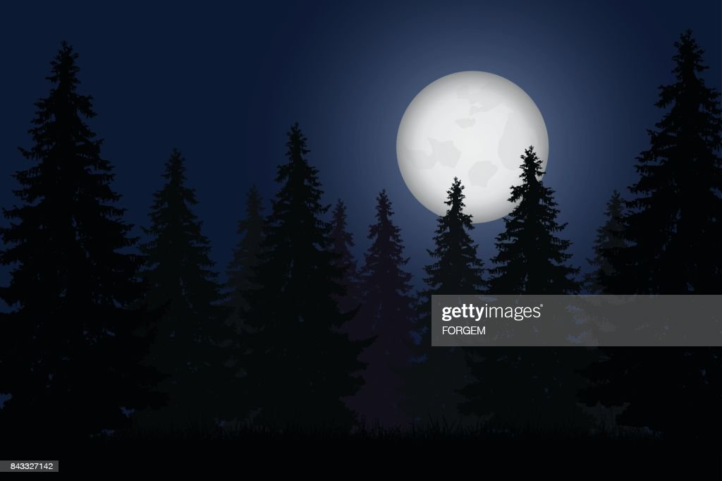 Realistic vector illustration of forest with trees under night sky with shining moon