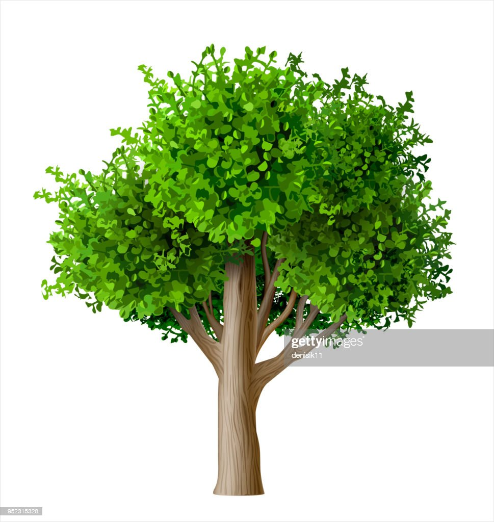 Realistic vector tree with leaves