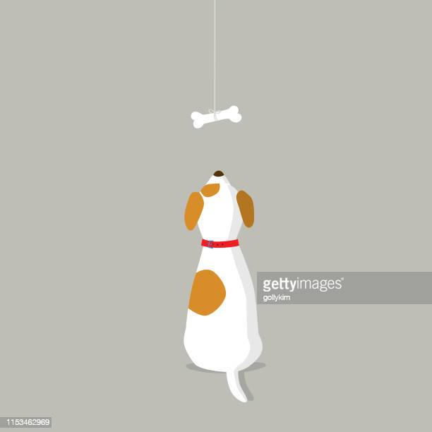 rear view of dog looking at dog bone - pet equipment stock illustrations, clip art, cartoons, & icons