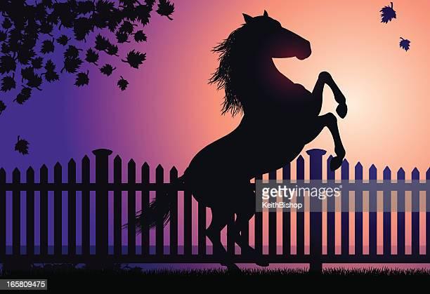 Rearing Horse in Autumn Sunset