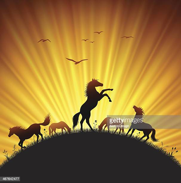 rearing horse in field - stallion stock illustrations, clip art, cartoons, & icons