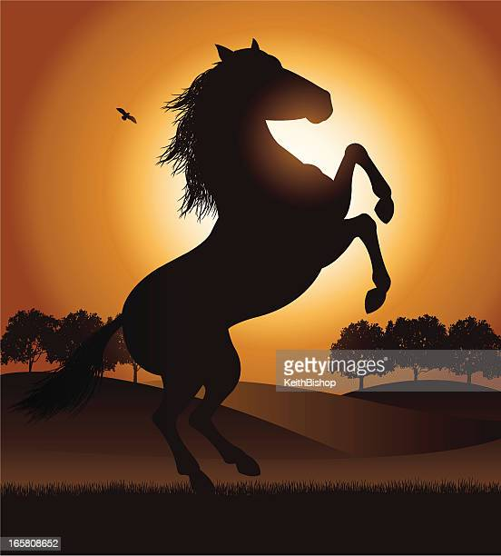 Rearing Stallion Horse in Field