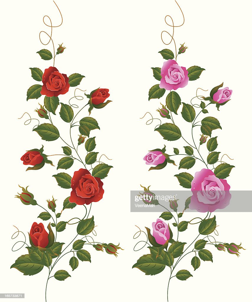 Red and Pink Rose Vine. : stock illustration