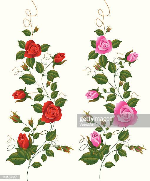 red and pink rose vine. - rosa stock illustrations