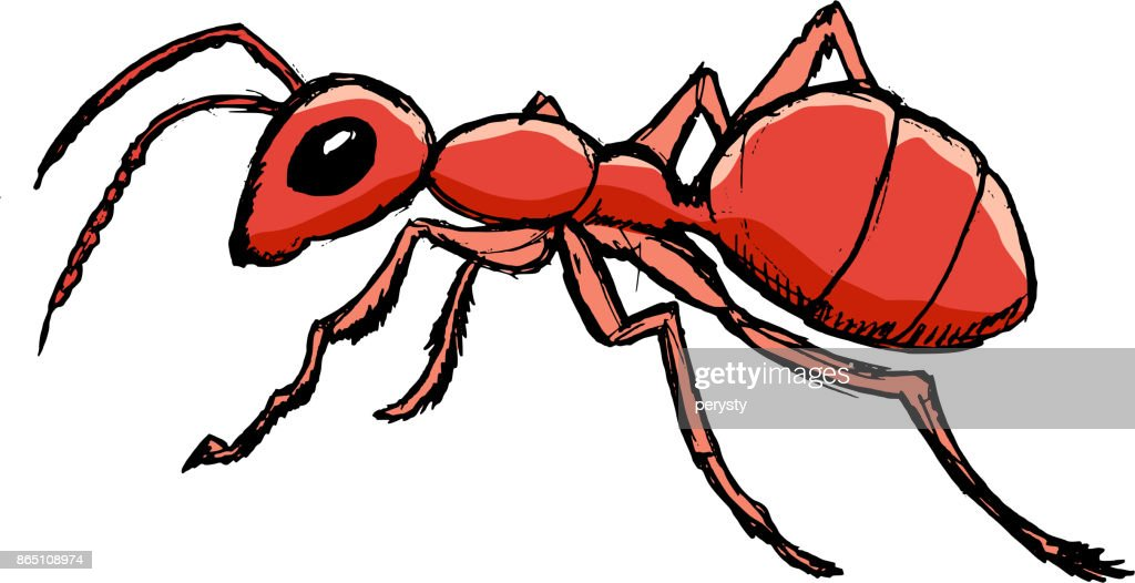 red ant from forest