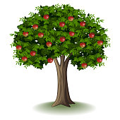 Red apple on apple tree