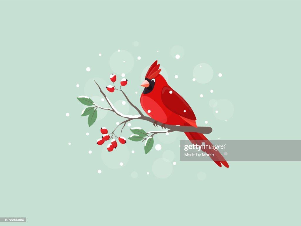 Red Cardinal bird sitting on mountain ash branch.