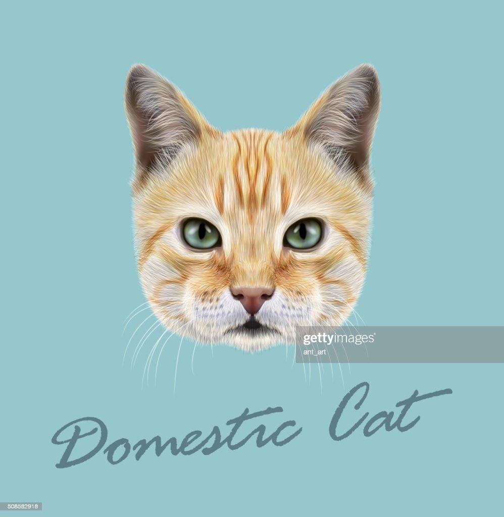 Red Cat. Vector Illustrated Portrait