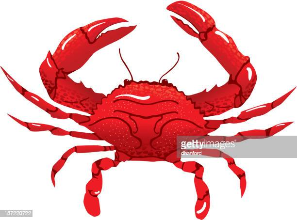 red crab - crab stock illustrations