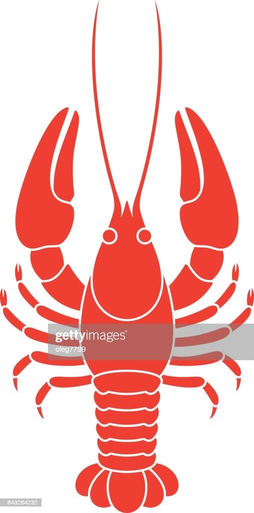 Red crayfish. Isolated crayfish on white background