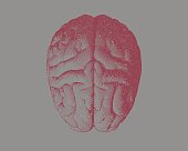 red engraving drawing brain on gray BG