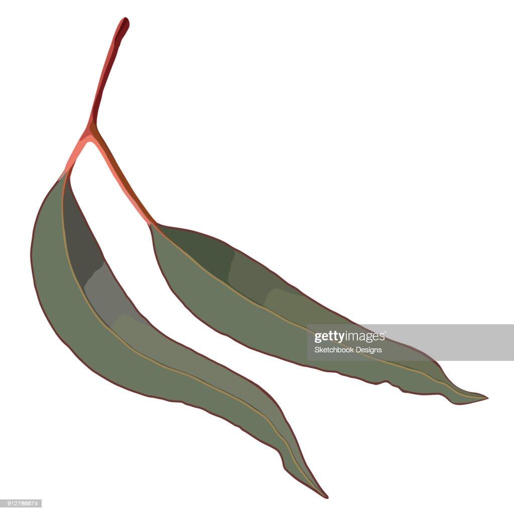 Red Eucalyptus Gum Leaves Realistic Vector