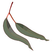 Red Eucalyptus Gum Leaves Realistic Vector