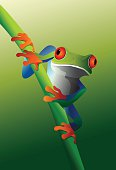 Red eyed tree frog on branches