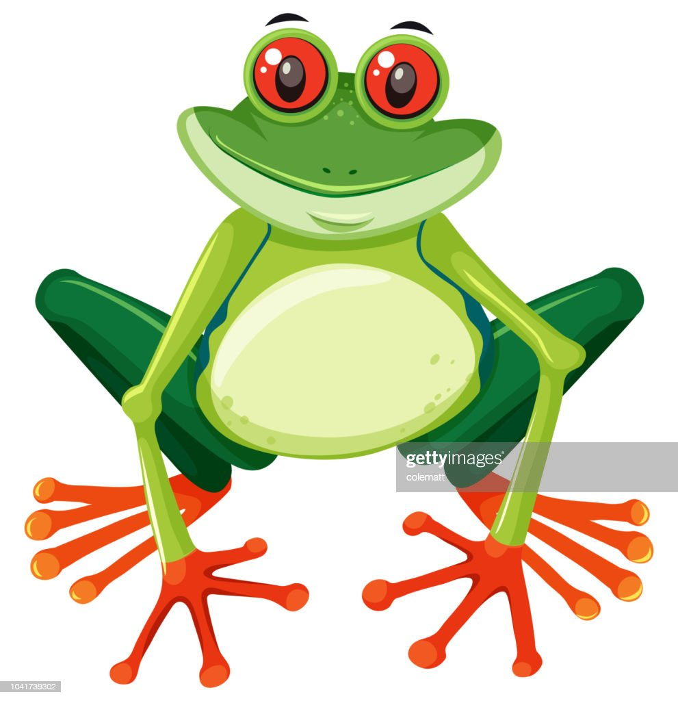 Red eyed tree frog on white background