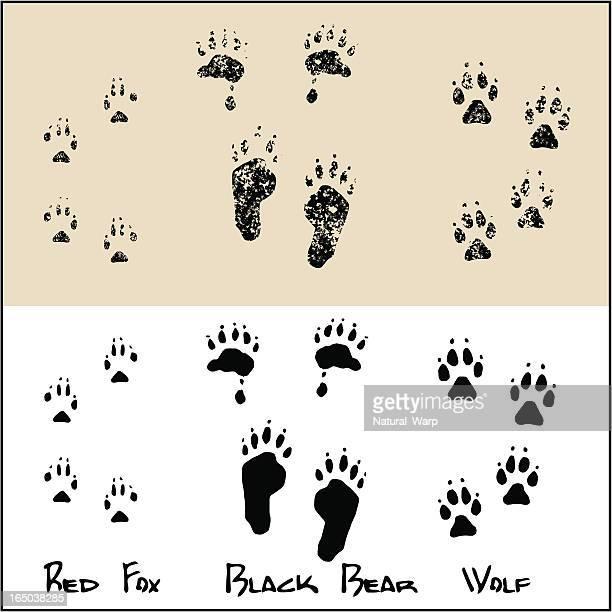 red fox-black bear-wolf - fuchspfote stock-grafiken, -clipart, -cartoons und -symbole