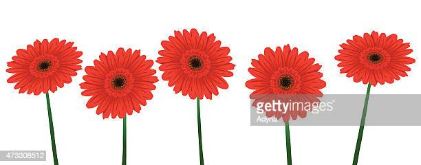 red gerbera - gerbera daisy stock illustrations, clip art, cartoons, & icons