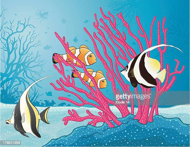 red gorgonian and tropical fishes / gorgone rouge - anemonefish stock illustrations, clip art, cartoons, & icons