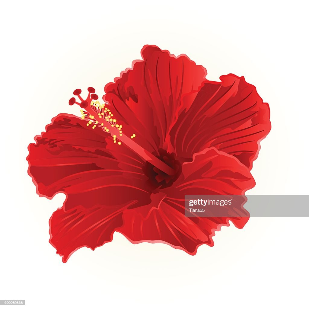 Red hibiscus simple vector