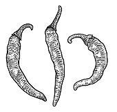 Red hot chili paprika illustration, drawing, engraving, ink, line art, vector