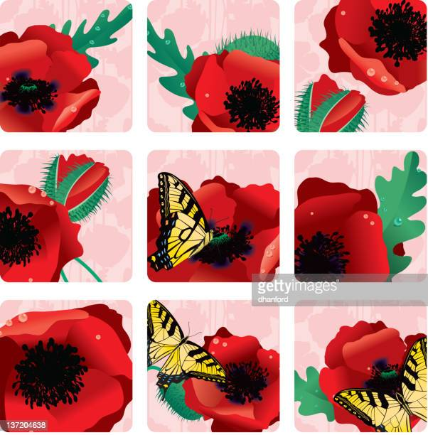 red oriental poppy squares or icons - oriental poppy stock illustrations, clip art, cartoons, & icons