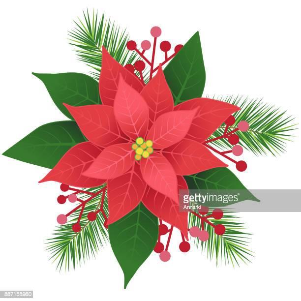 ilustraciones, imágenes clip art, dibujos animados e iconos de stock de flor de nochebuena flor roja - flor de pascua