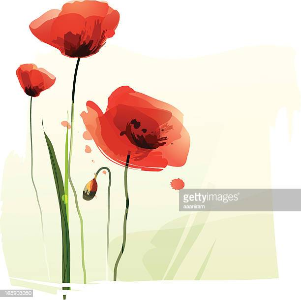 red poppies - poppy stock illustrations, clip art, cartoons, & icons