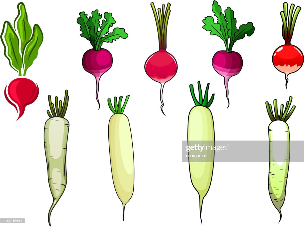 Red radishes and white daikon vegetables