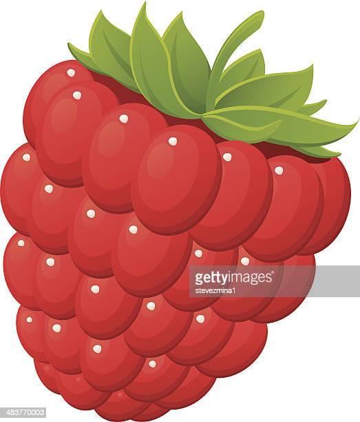 red raspberry - raspberry stock illustrations, clip art, cartoons, & icons