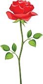 Red rose with stem isolated on white. Vector illustration.