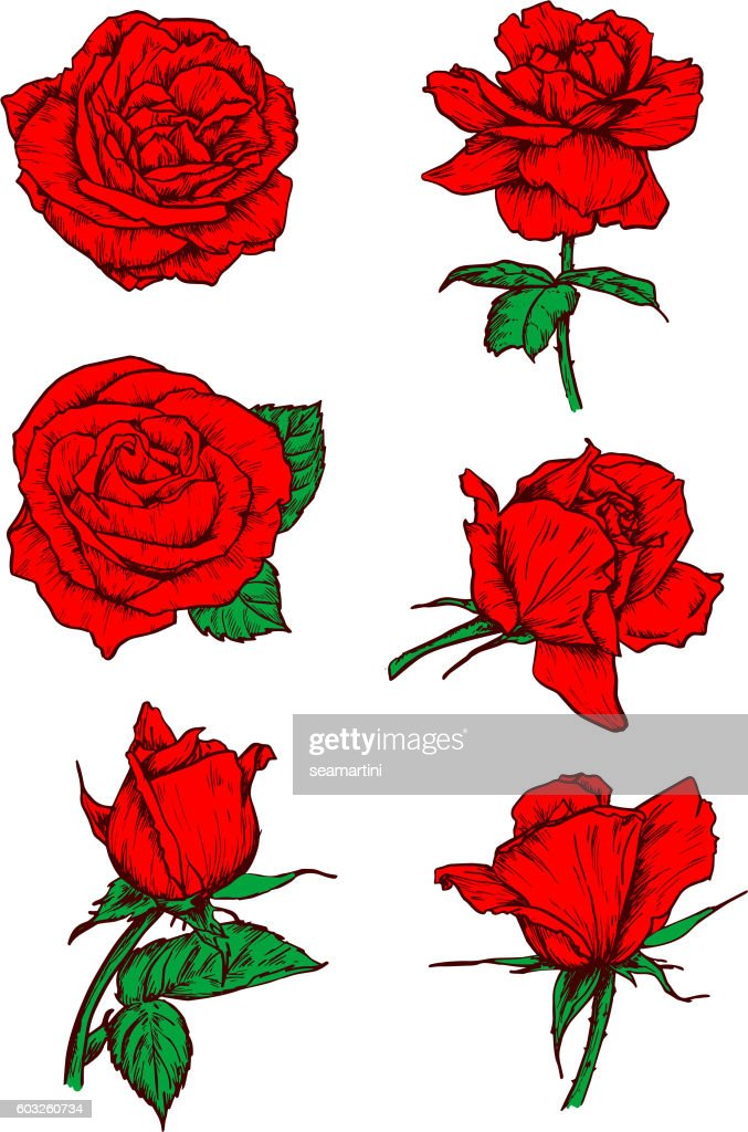 Red roses buds icons. Flower sketch emblem
