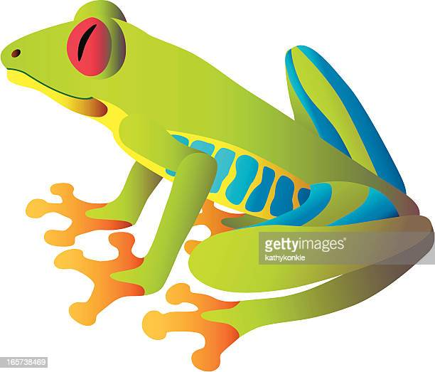 red-eyed tree frog sitting - tree frog stock illustrations