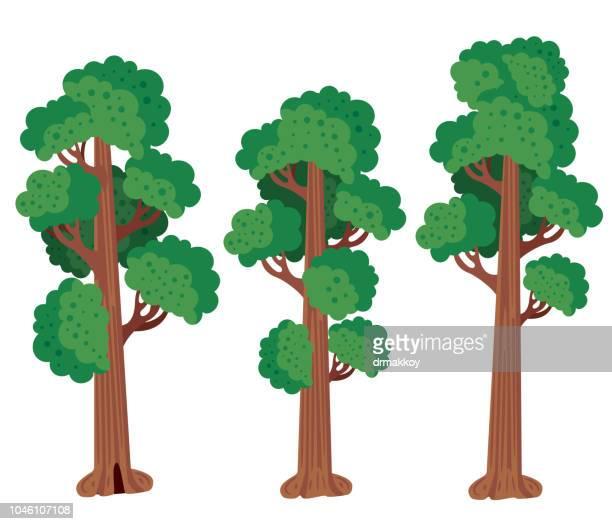redwood tree - sequoia tree stock illustrations